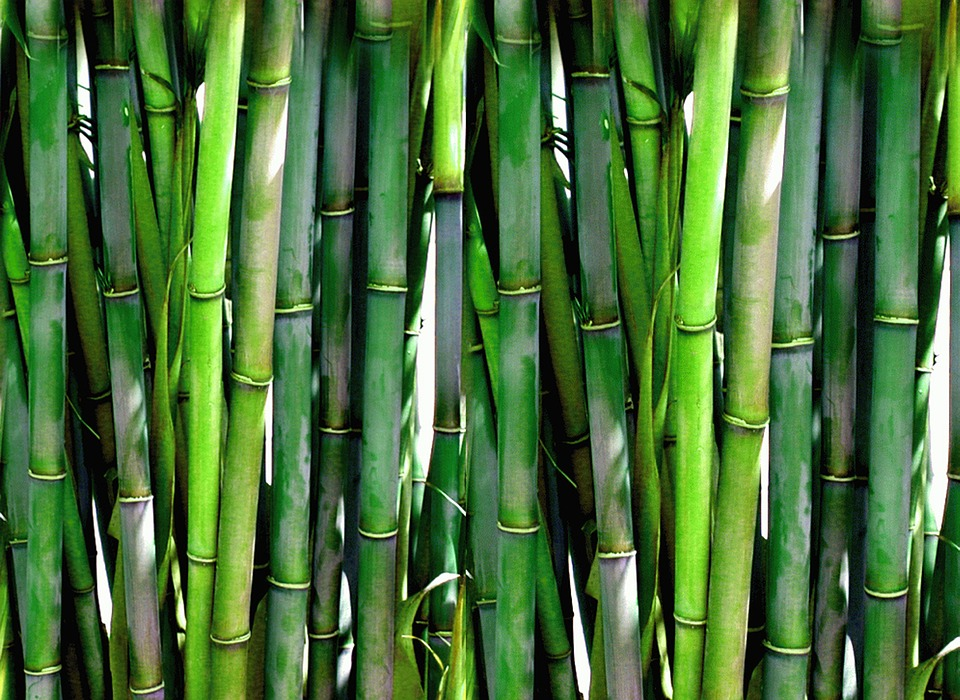 Bamboo sustainable manufacturing material