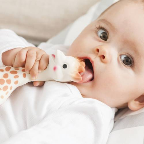 baby putting Sophie the Giraffe teether in her mouth